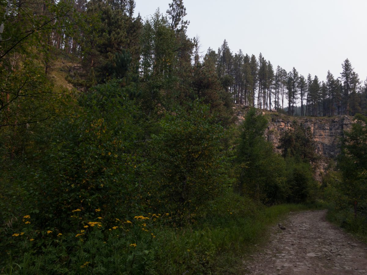 A rough, rocky trail road in the Black Hills surrounded by trees