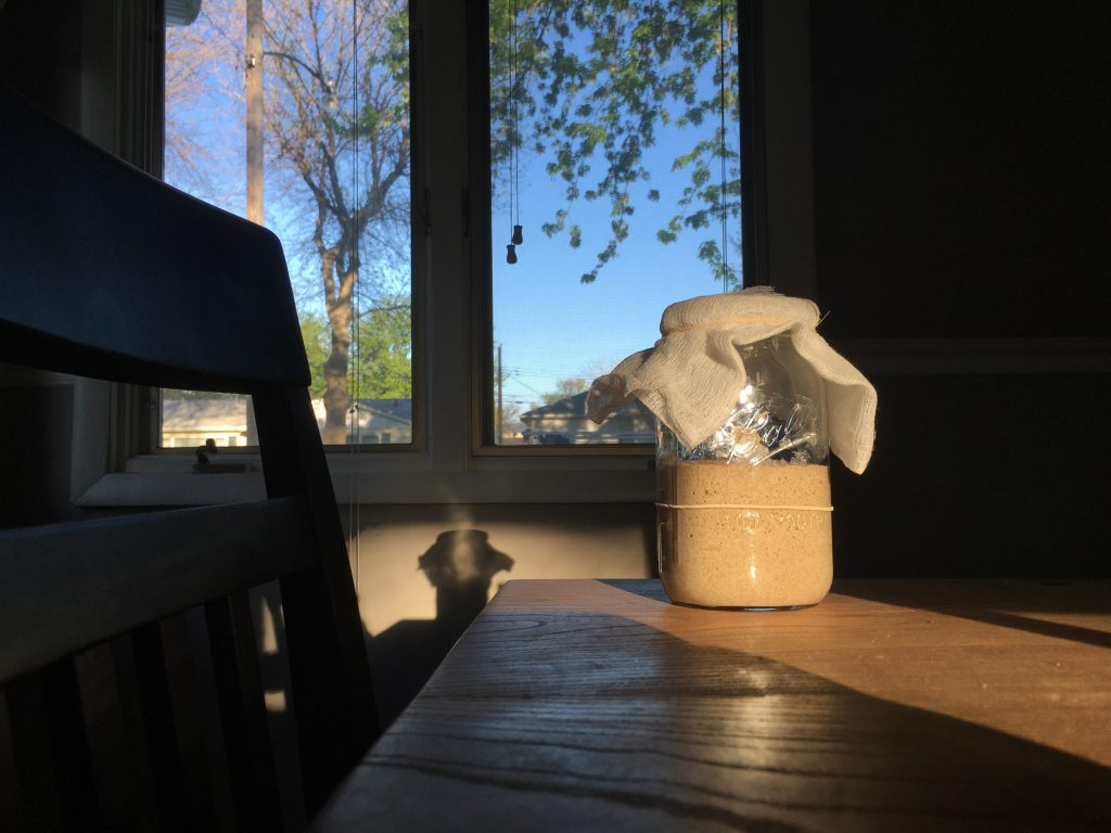 a mason jar with the beginnings of an active sourdough starter sitting in the morning light